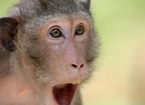 the-monkey-409407_960_720