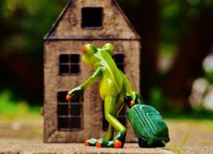 frog-986034_960_720